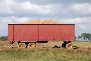 History of Peanuts, Consumption, & Affordability