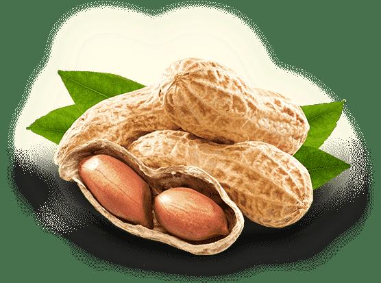 Image result for peanut